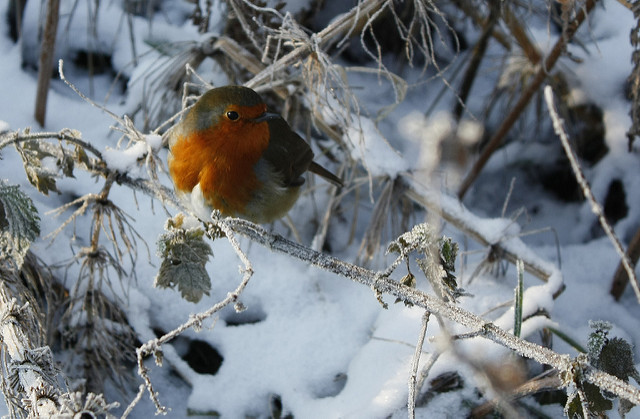 Merry Christmas by Kit on Flickr