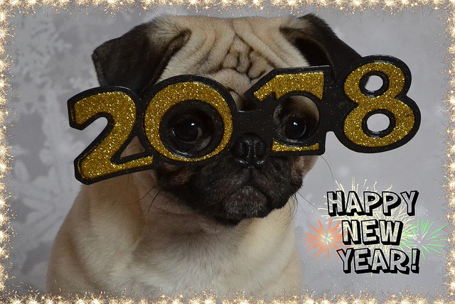 Happy New Year! by DaPuglet on Flickr